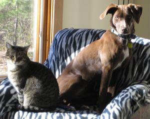 Cat & Dog 2