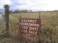 Gourmet_hay_2